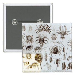 Crustacea and Arachnida 2 Inch Square Button