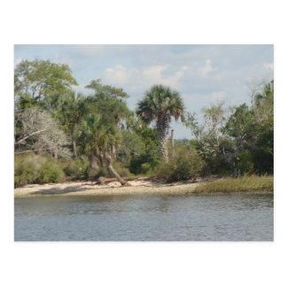 Crystal River Florida Postcard