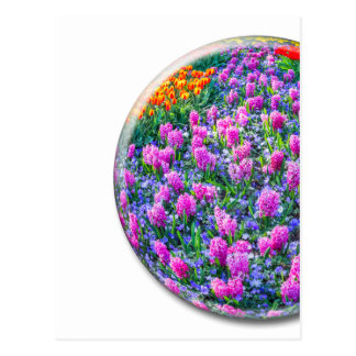 Crystal sphere with pink hyacinths on white postcard