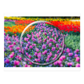 Crystall ball with pink hyacinths and flowers postcard