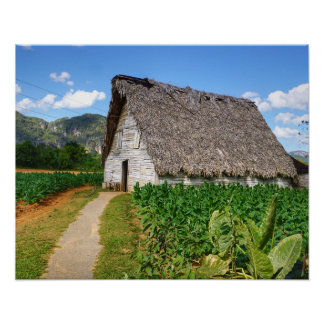 Cuban Tobacco Farm and Drying House Poster
