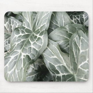 Cuckoo Pint Leaves In Black And White Mouse Pad