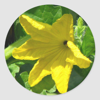 Cucumber Bloom Classic Round Sticker