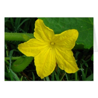 Cucumber Bloom Greeting Card