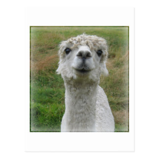 Cuddle Me - Alpaca Postcard