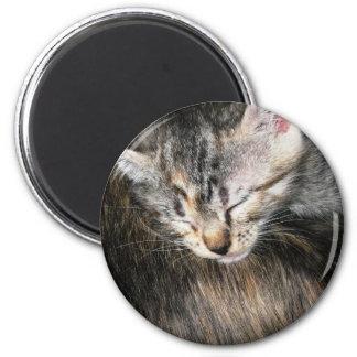 Cuddly Kitten Magnet