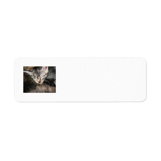 Cuddly Kitten Return Address Label