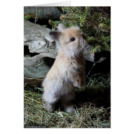 Cuddly Lionhead Bunny Card