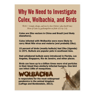 Culex, Wolbachia, and Birds by RoseWrites Postcard