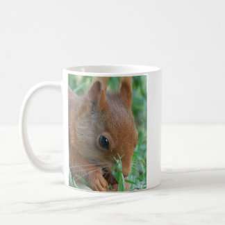 Cup ÉCUREUIL Cup SQUIRREL cup of SQUIRRELS