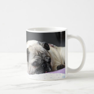 CUP of Pug pug Carlin - photo: Jean Louis Glineur
