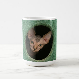 Cup with a cute sphynx kitten