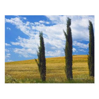 (cupressus sempervirens)  - Europe, Italy, 2 Postcard