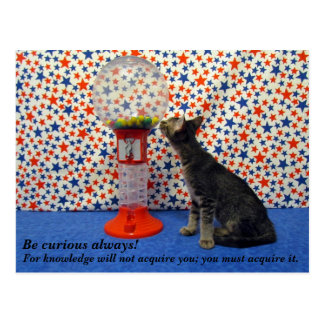 Curiosity - Starring Kori the Rescue Kitty Postcard