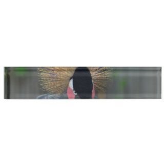 Curious African Crowned Crane Nameplate