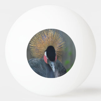 Curious African Crowned Crane Ping-Pong Ball