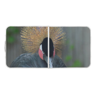 Curious African Crowned Crane Pong Table