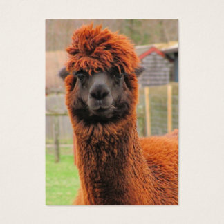 Curious Alpaca ~ ATC Business Card