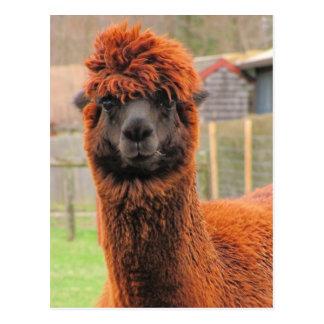 Curious Alpaca calendar ~ postcard