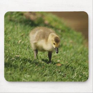 Curious Baby Goose and the Baby Mushroom Mousepad