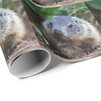 Curious Baby Marmot Wrapping Paper