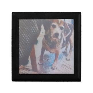 Curious Beagle Gift Box