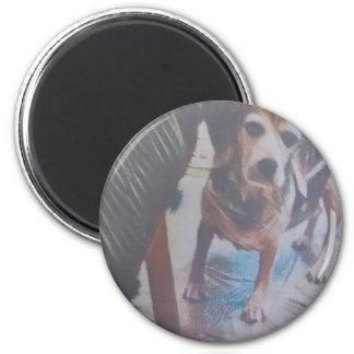Curious Beagle Magnet
