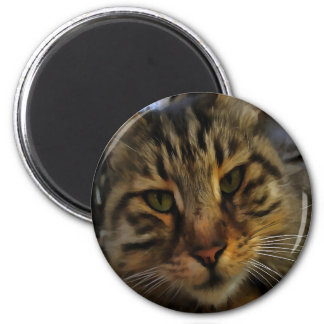 Curious Cat 2 Inch Round Magnet
