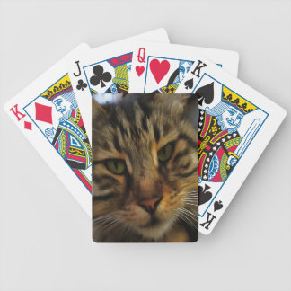 Curious Cat Bicycle Playing Cards