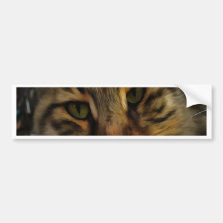 Curious Cat Bumper Sticker