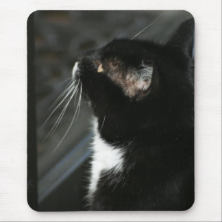 Curious Cat mousepad