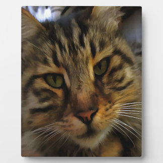 Curious Cat Plaque