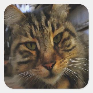 Curious Cat Square Sticker