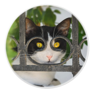 Curious Cat with Spectacles Frame Funny Decorative Ceramic Knob