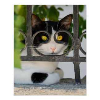 Curious Cat with Spectacles Frame Funny Photo  on Poster