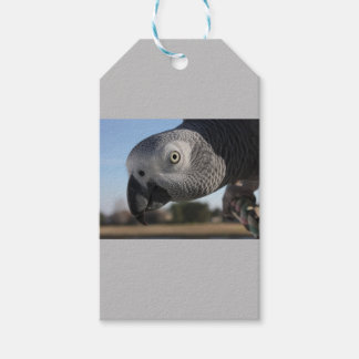 Curious Congo African Grey Parrot Pack Of Gift Tags