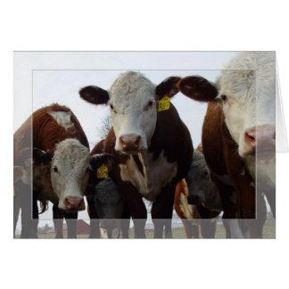 Curious Cows 1 Card