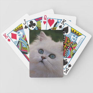 Curious cute white kitten bicycle playing cards