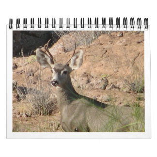 Curious Deer Calendar