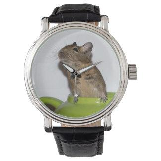 Curious Degu in a Green Teapot Watch