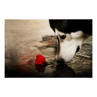 Curious Dog and Red Rose Poster