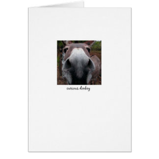 Curious Donkey Card