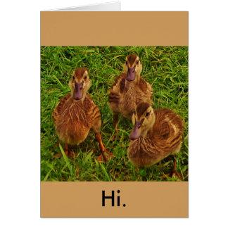Curious Ducks Card