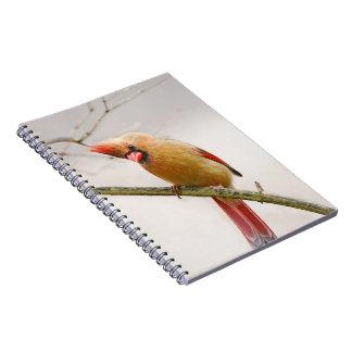 Curious Female Cardinal Notebook