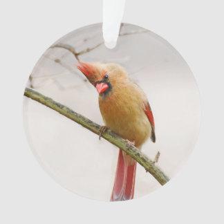 Curious Female Cardinal Ornament