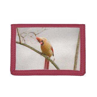Curious Female Cardinal Wallet