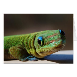 Curious Gecko Card