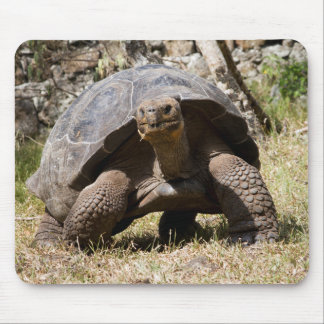 Curious Giant Tortoise | Galapagos Mouse Pad