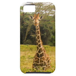 Curious Giraffe iPhone 5 Case