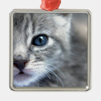 Curious Grey Kitten Silver-Colored Square Ornament